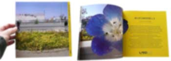 Wildflowering L.A. Book
